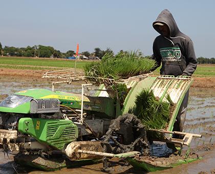Koperasi Pertanian Perlu Dikuatkan