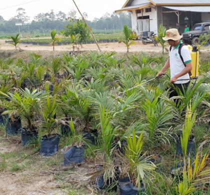 Demplot Perdana Pupuk Biokonversi di Jambi