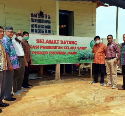 Jambi Dipilih Menjadi Lokasi Pengembangan Pembibitan Kelapa Sawit Induk KUD